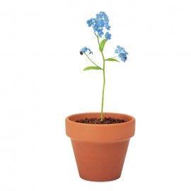 Floare de nu ma uita, ghiveci ceramica si seminte de plantat